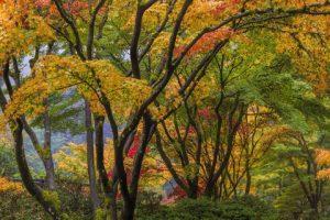 Enjoying Portland's fall colors!